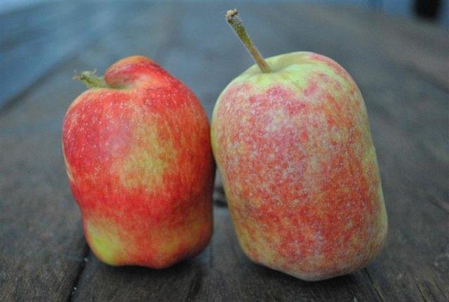 anna-apples