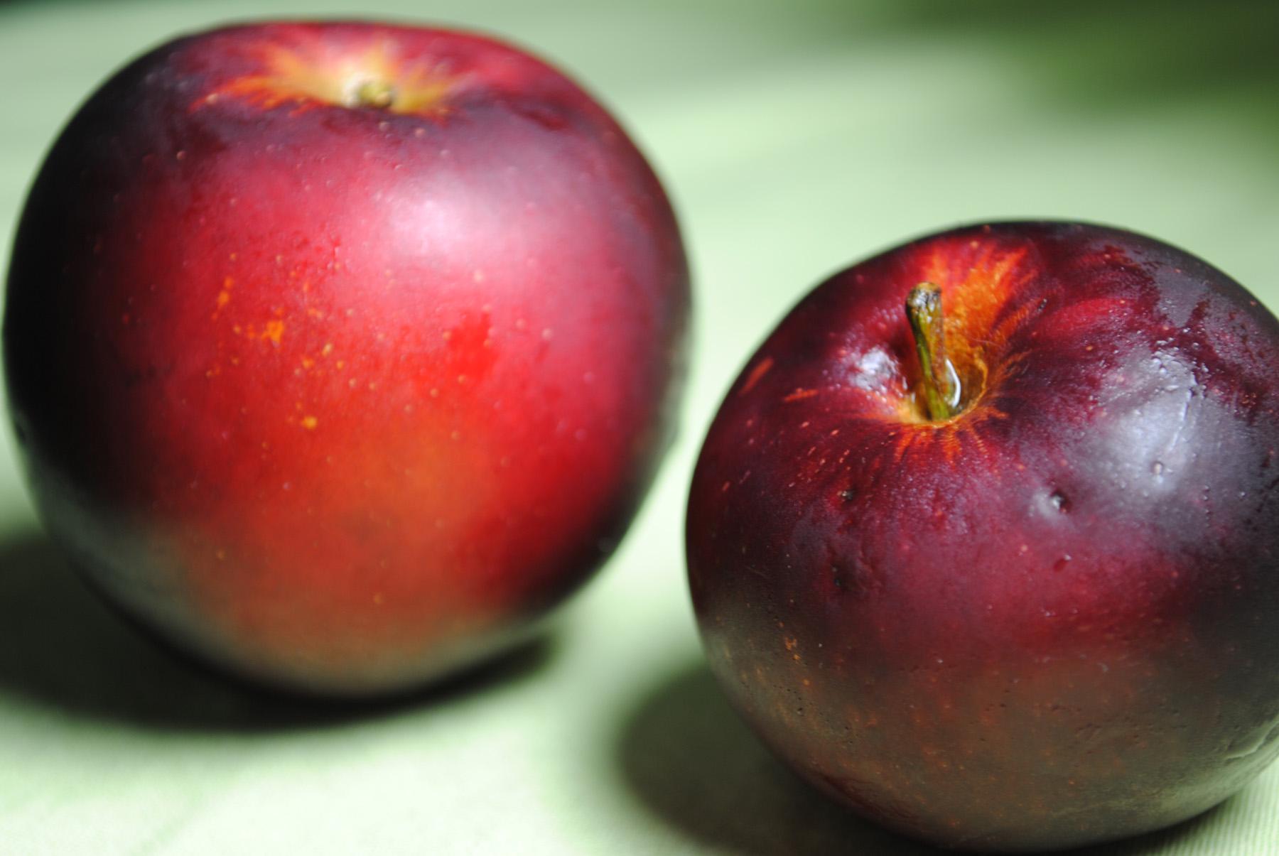 apple - photo #16