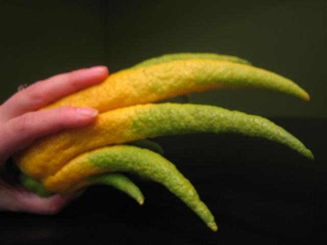 ส้มมือเทียบกับมือจริงๆ