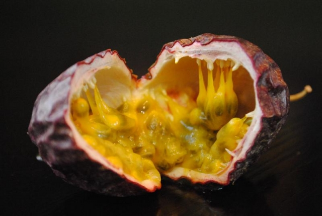 Frederick Passion Fruit