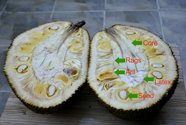 cut-jackfruit-chart