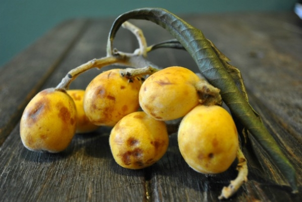 loquats-bunch