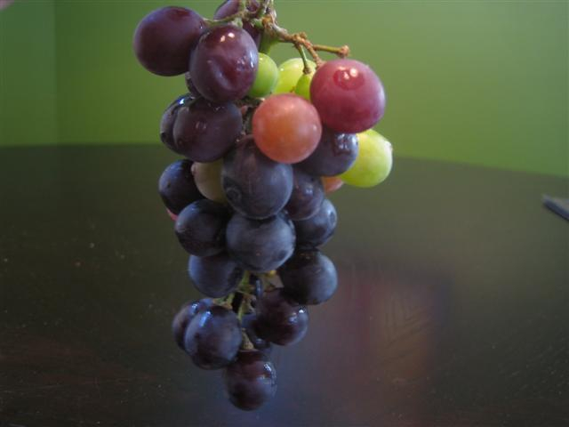 concord-grape-bunch