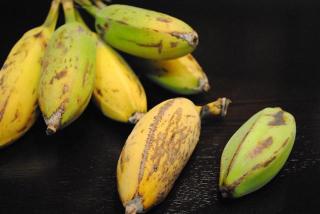 Orinoco Banana