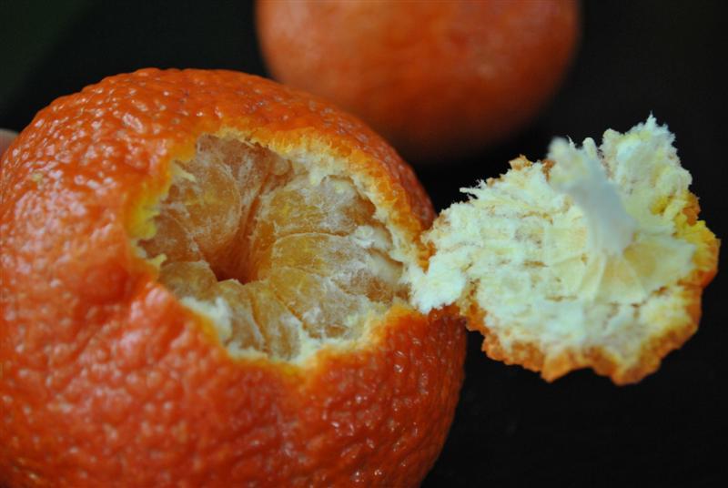 Shasta Tangerine