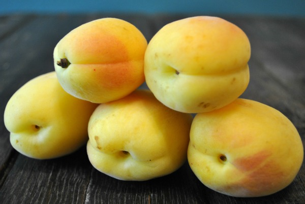 Angelcot Apricots