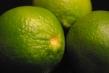 Bears Lime