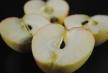 blushing-gold-apples