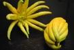 Buddha\'s Hand Citron