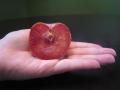 dapple-dandy-pluot-seed