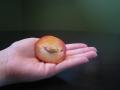 flavor-jewel-pluot-seed