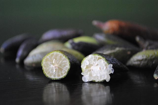 Green Seedless Australian Fingerlime