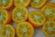 meiwa-kumquat-slices