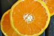 pixie-tangerine-close-up