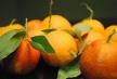 Sanguinella Blood Orange