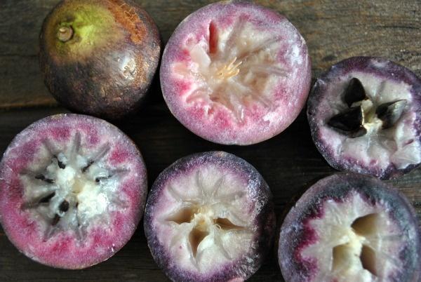 star-apples