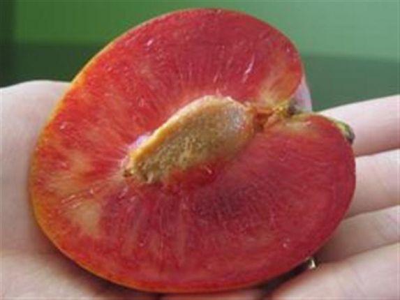 elephant-heart-plum