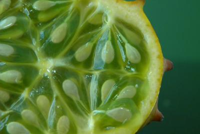 Kiwano/Horned Melon